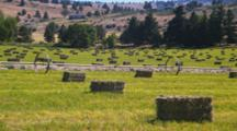 Field Of Bailed Hay