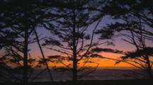 Pan Of Sunset Through Trees At Shore