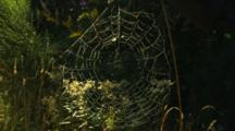 Mist Blows Dew Covered Spider Web In Forest
