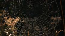 Dew Covered Spider Web in Forest