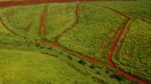 Aerials Kauai Farmland, Possibly Sugar Cane, Showing Famous Red Dirt
