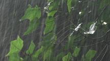 Rain On Forest Plants, Hawaii