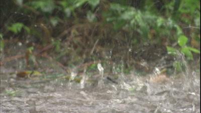 Rain Stock Footage