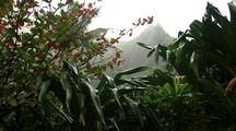 Tropical Plants In Rain, Tilt To Distant Mountain