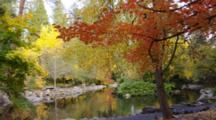 Steadicam Walk In Lithia Park With Fall Colors