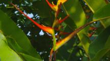 Green Gecko On Bird Of Paradise Flower
