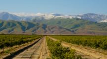 Vineyard In Southern California With Snow Dusted Mountains Behind
