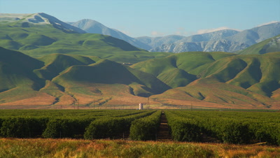 Vineyard In Southern California With Mountains Behind