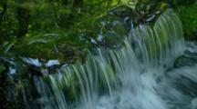 Water Flows From Spring In Lush Green Forest