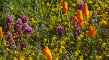 Close Up Patch Of Wildflowers