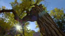Sunburst Through Tree Branches In Autumn Colors