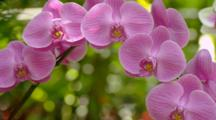 Orchids In Tropical Forest