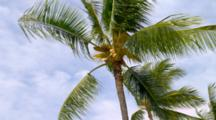 Looking Up At Palm Trees, Blue Sky, Breeze