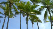 Looking Up At Palm Trees In The Wind, Slow Motion