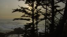 Ocean Waves And Cypress Trees, Shore Acres State Park?