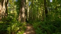 Time Lapse Light And Shadows In Redwood National Park
