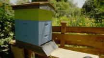 Active Backyard Beehive
