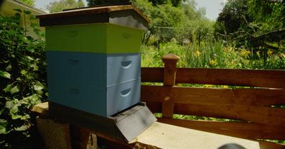 Close Up Active Backyard Beehive
