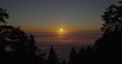 Sunset on Fog Horizon Silhouettes Redwood Forest