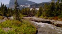Wildflowers, Possibly Glacier Lilies, Next To Creek, Peak In Background