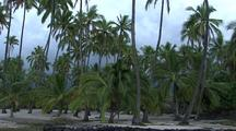Palm Trees Along Big Island Coast