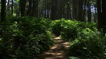 Trail In Olympic National Park