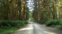 Forest Road In Olympic National Park