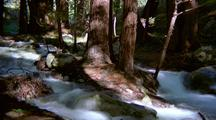 Time Lapse Of Creek Through Forest, Big Sur