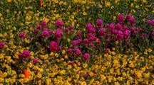 Flowers At Antelope Valley California Poppy Reserve
