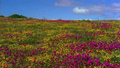 Panoramic View Of Antelope Valley California Poppy Reserve
