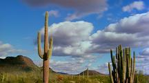 Time Lapse At Organ Pipe Cactus National Monument