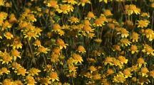 Field Of Spring Wildflowers