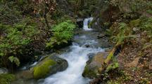 Time Lapse Of Forest Stream In Big Sur