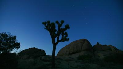 Time Lapse Joshua Tree At Night During Full Moon