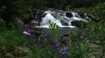 Mt. Rainier, Creek With Rapids, Waterfall
