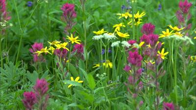 Flowering Plant Stock Footage
