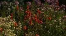 Wildflowers, Mt Rainier