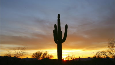 Time Lapse Organ Pipe Cactus National Monument At Sunset