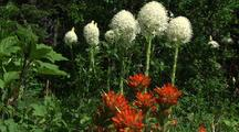 Wildflowers Beargrass And Indian Paintbrush