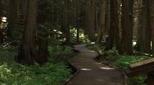 Boardwalk Trail Of The Cedars Through Forest