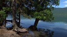 Cedar Trees Next To Still Lake