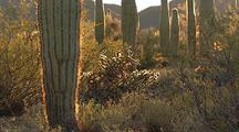 Backlit Desert Scenic