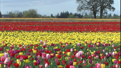 All Flower Stock Footage