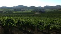 Napa Valley Vineyard In Wind
