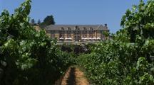 Napa Valley Vineyard And Winery