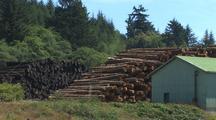 Stacks Of Logs, Lumber Mill