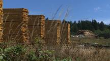 Stacks Of Boards, Lumber Mill