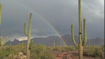 Desert Plant Stock Footage