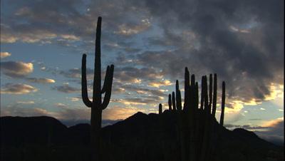 Dusk At Organ Pipe Cactus National Monument