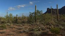 Walking Through Organ Pipe Cactus National Monument